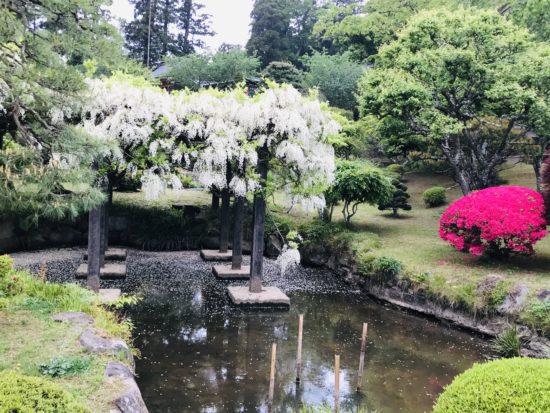 塩釜神社の藤棚